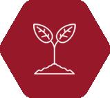 croissance_rouge
