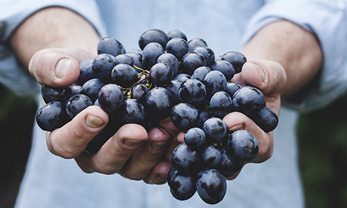 Surprenant gel des vignobles bordelais et de cognac : les stocks au secours de leur trésorerie !